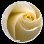 Rose Circle Image